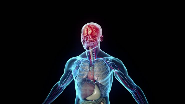 Yirmi Dört Saatte Vücudumuzda Neler Oluyor?