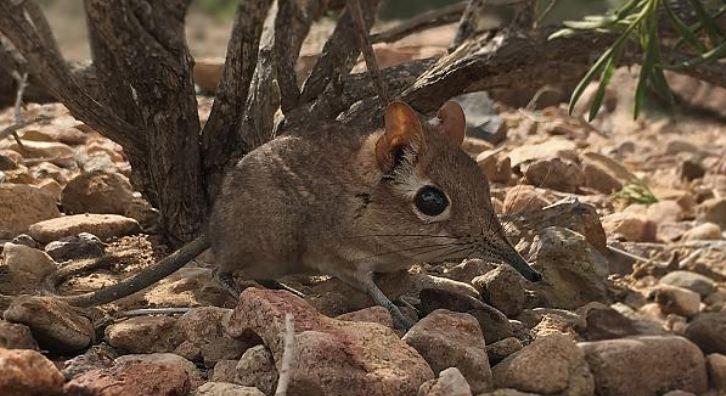 Global Wildlife Conservation'ın En Çok Aranan Listesindeki Sevimli Canlı